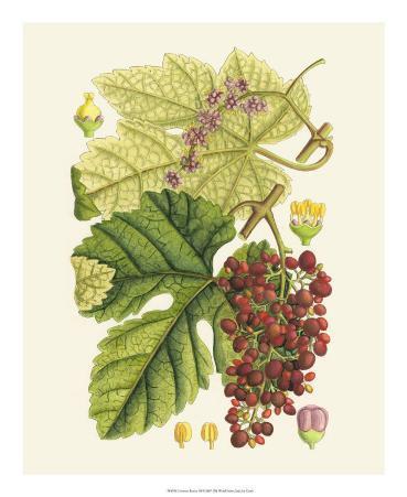 Crimson Berries III