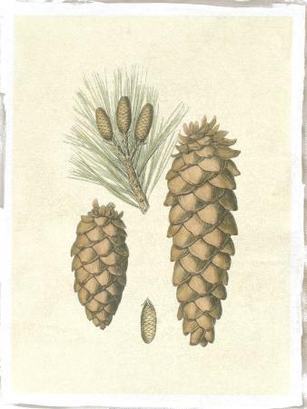Crackled Woodland Pinecones II