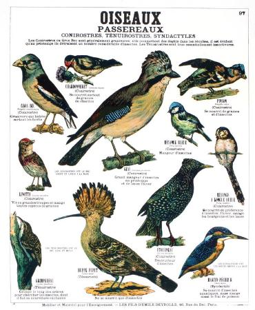 Song Bird Teaching Chart