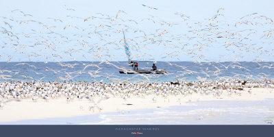 Madagascar Seabirds