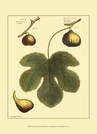 Fig Leaf I