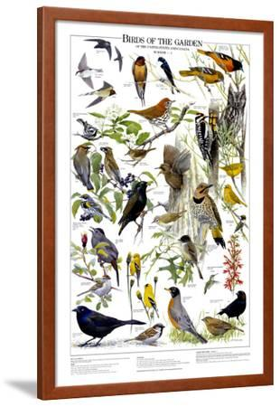 Birds of the Garden Summer