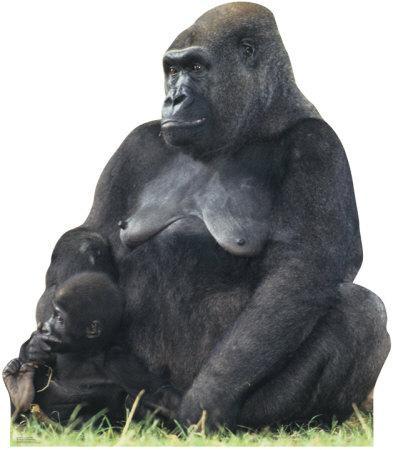 Gorilla Mom & Child