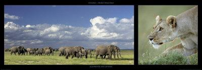 Elephants and Lioness