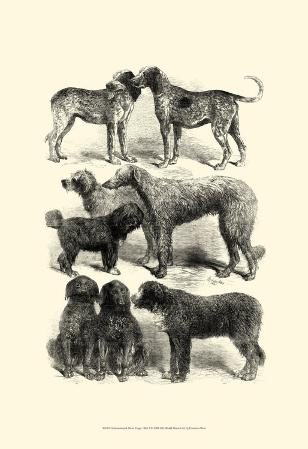 International Show Dogs I, c.1863
