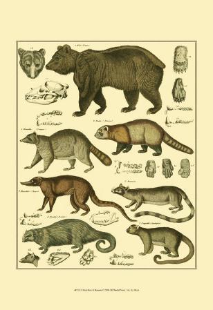 Oken Bear and Racoon
