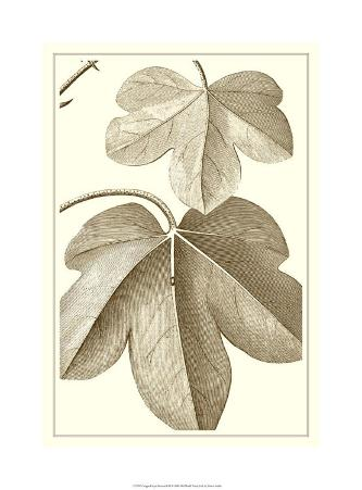Cropped Sepia Botanical III