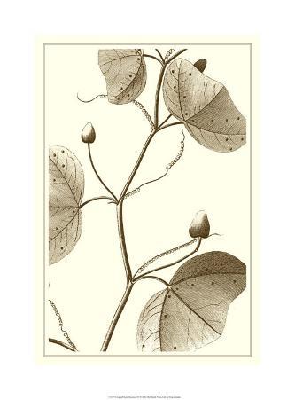 Cropped Sepia Botanical IV