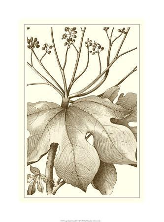 Cropped Sepia Botanical VI