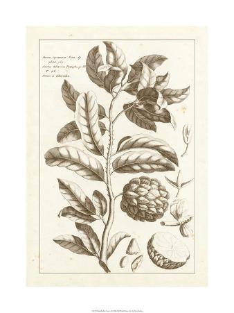 Sepia Exotics I