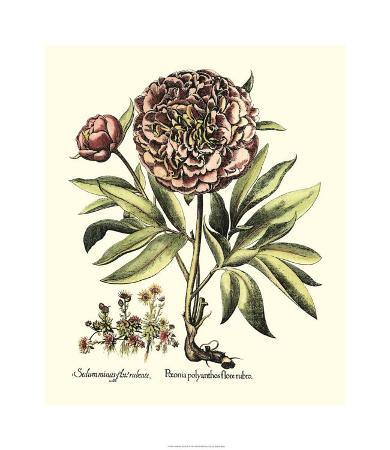 Framboise Floral III