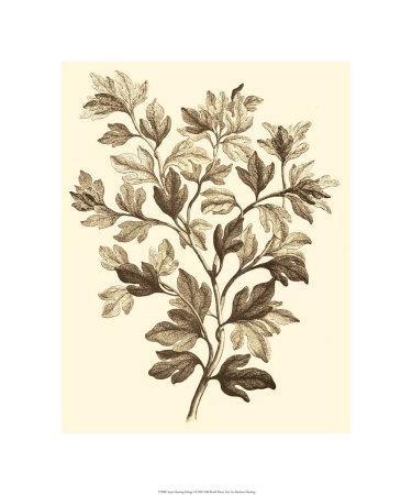 Sepia Munting Foliage I
