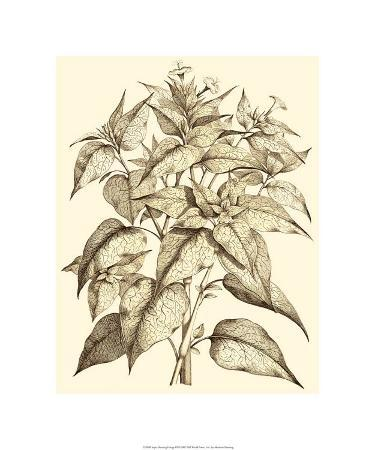 Sepia Munting Foliage III