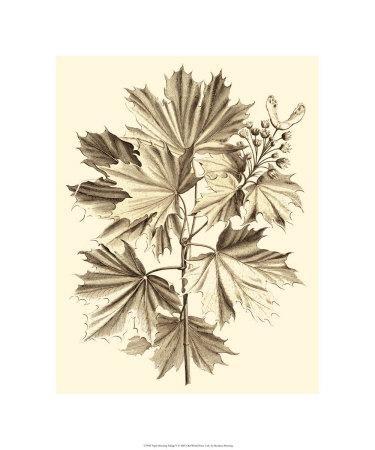 Sepia Munting Foliage V