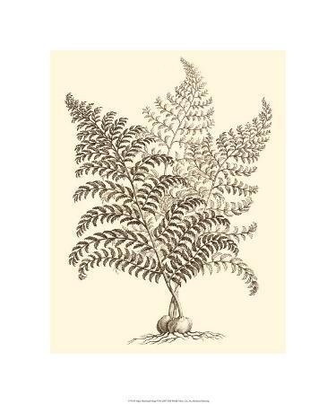 Sepia Munting Foliage VI