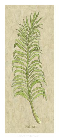 Palmae Leaf