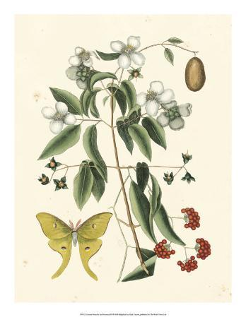 Butterfly and Botanical III