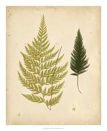 Cottage Ferns I