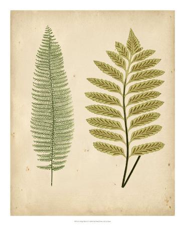 Cottage Ferns II