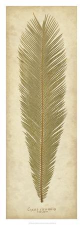 Sago Palm I