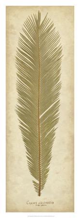 Sago Palm II