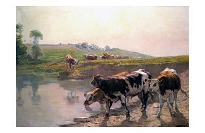 Pasture Cattle at Watering Hole