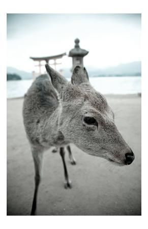 The Deer of Itsukushima