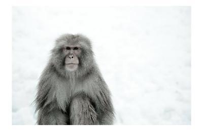 Monkey on Hot Spring Ground
