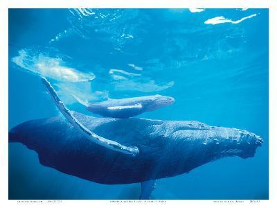 Hawaiian Humpback Mother and Calf