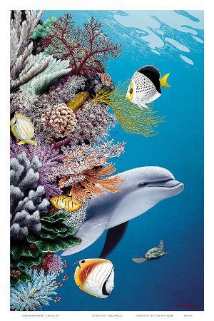 Dolphin's Reef, Hawaii