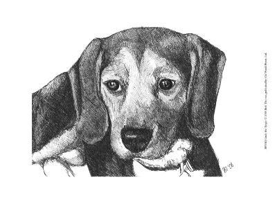 Lindy the Beagle