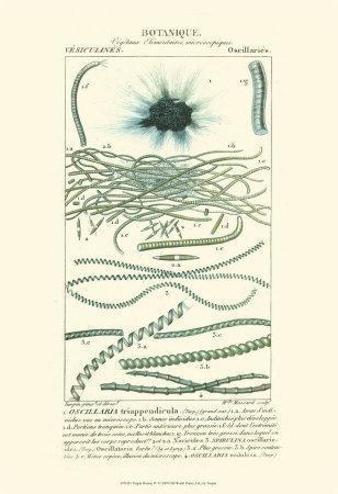 Turpin Botany IV