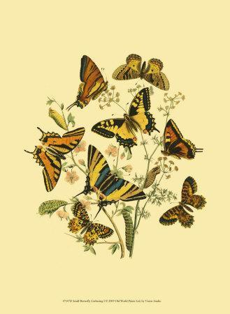 Small Butterfly Gathering I