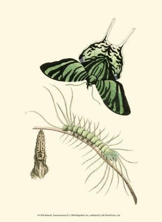 Butterfly Transformation II