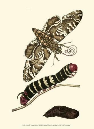 Butterfly Transformation III