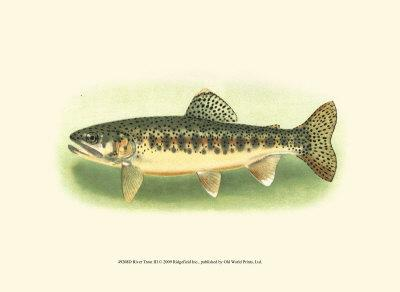 River Trout III