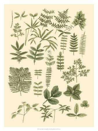 Abundant Foliage II