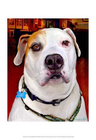 Sonny American Bulldog