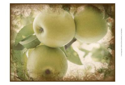 Vintage Apples II