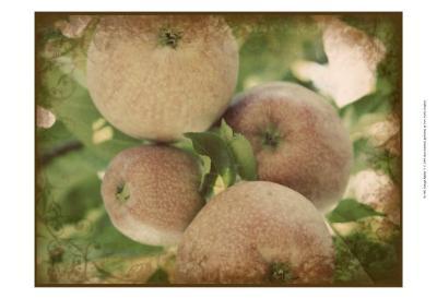 Vintage Apples IV