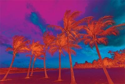 Abstract Palm Trees
