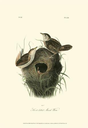 Short-Billed Marsh Wren