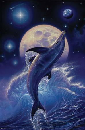 Dolphin - Balance of Life