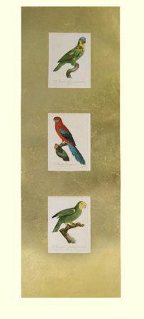 Parrot Panel II