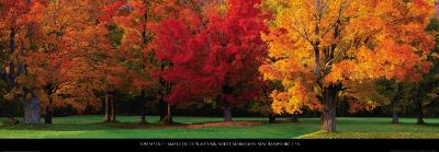 Maple Trees in Autumn, White Mountains, New Hampshire