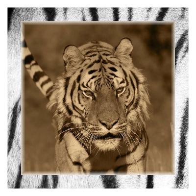 Tiger Views