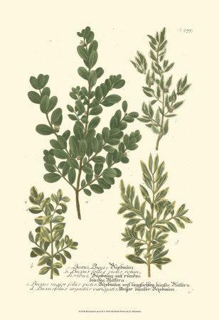 Leaves II
