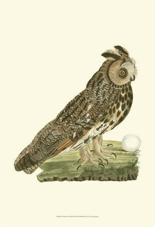 Owls III