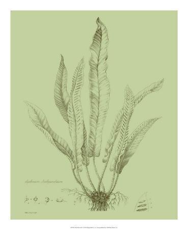 Fresh Ferns IV