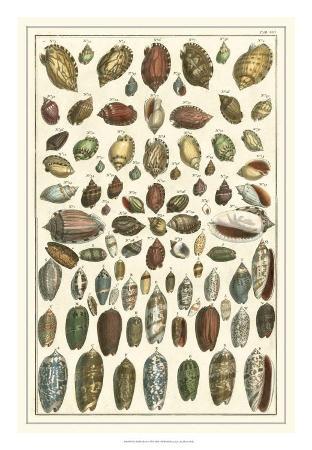 Seba Shell Collection VI